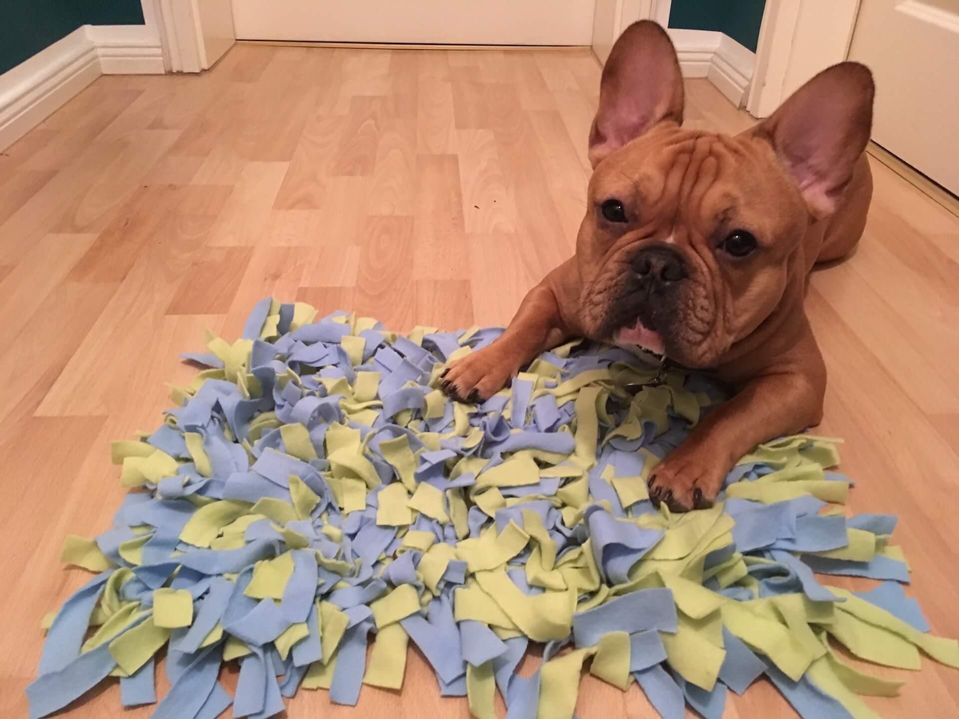 Hund-mit-Schnuffelteppich