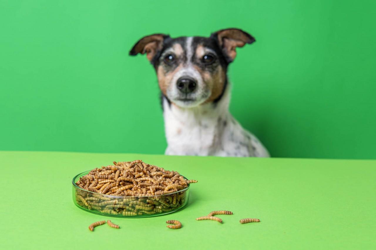 TENETRIO_Ratgeber-fur-Hunde_Vorteile-Nachteile-Insektenprotein-im-Hundefutter