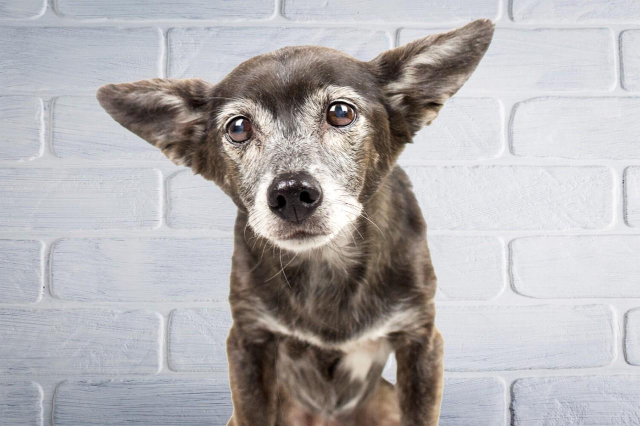 TENETRIO_Senior-Hunde-beim-Alt-werden-unterstutzen