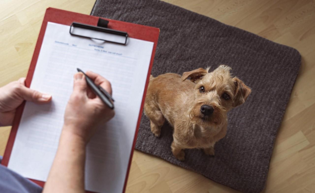 TENETRIO_10-Schritte_gesundes-Verdauungssystem-beim-Hund