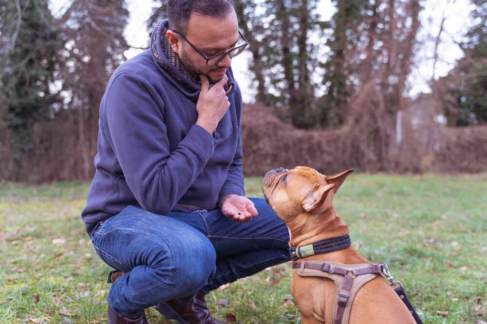 Hundeleckerlis-zur-Erziehung-und-im-Training