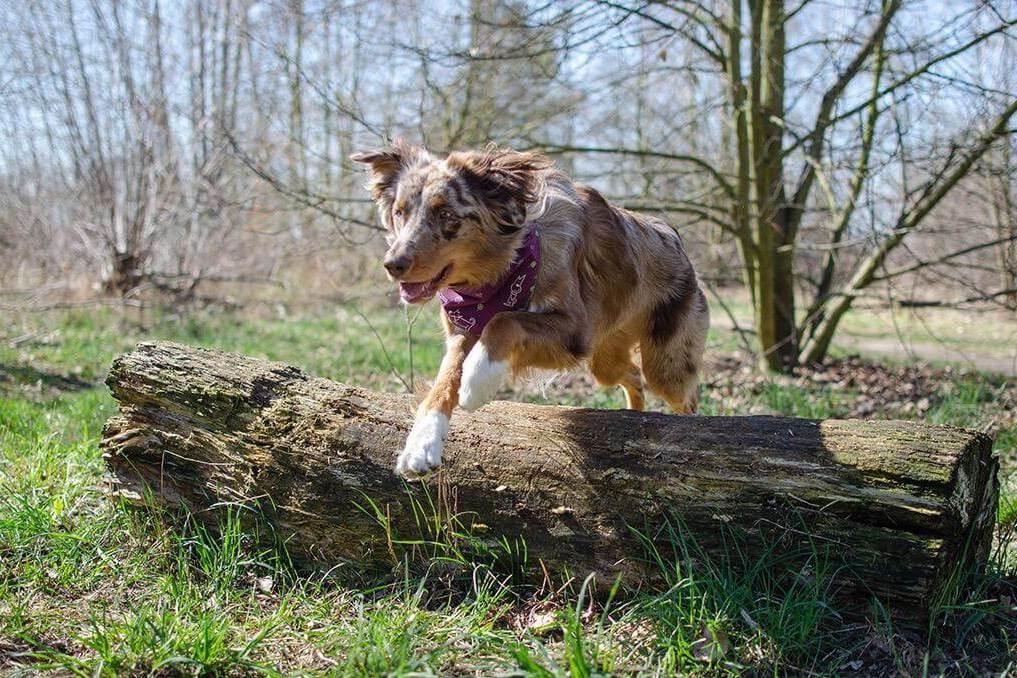 TENETRIO_Ratgeber_Gelenke-beim-Hund