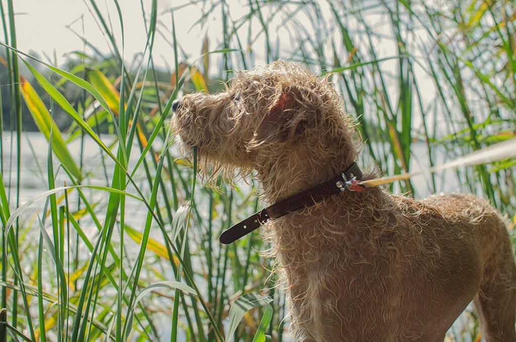 1-Outdoor-Aktivita-ten-mit-Hund_Tipps-zur-schnellen-Entscheidung
