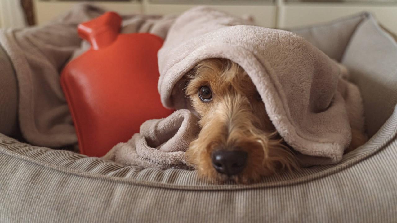 TENETRIO_Bauchschmerzen-beim-Hund_Ursachen-und-Behandlung