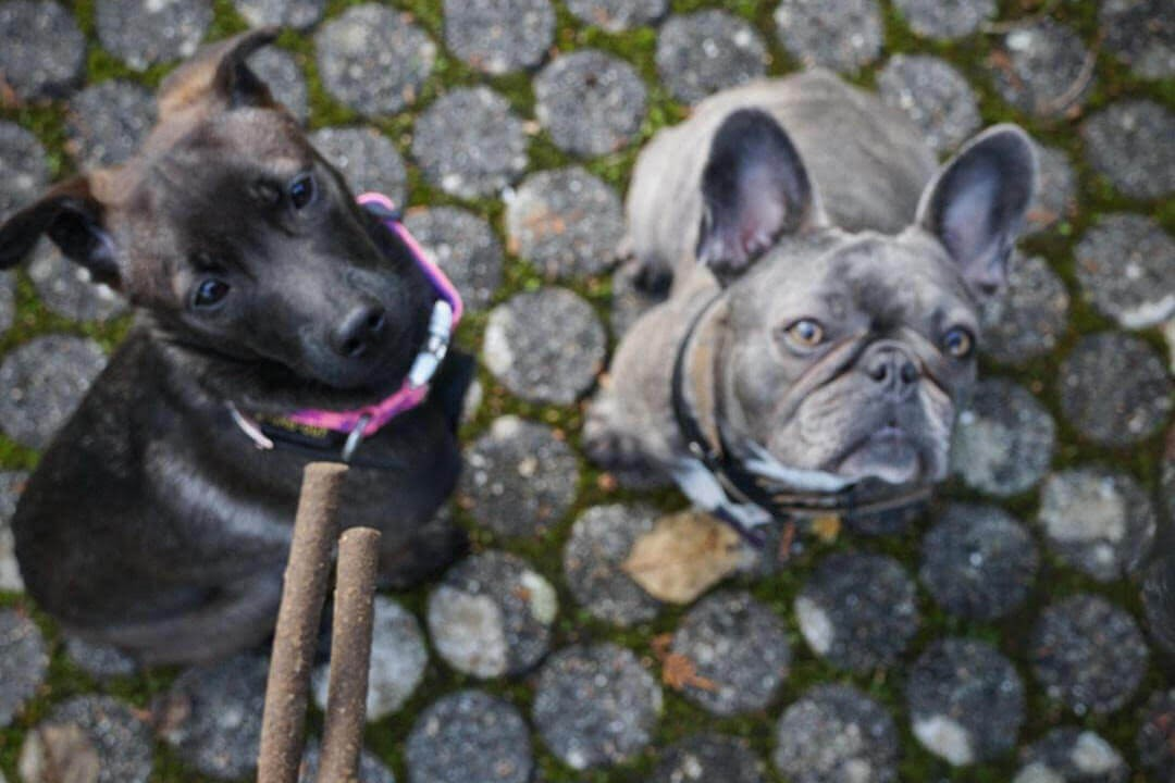 TENETRIO_Hundegeschichte_Leaky-Gut_Luna-und-Puka-mit-STICKS