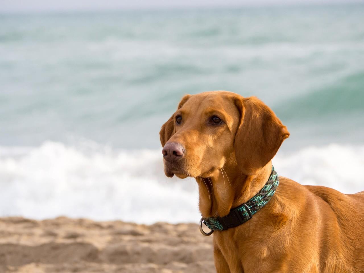 Badespaß mit Hund