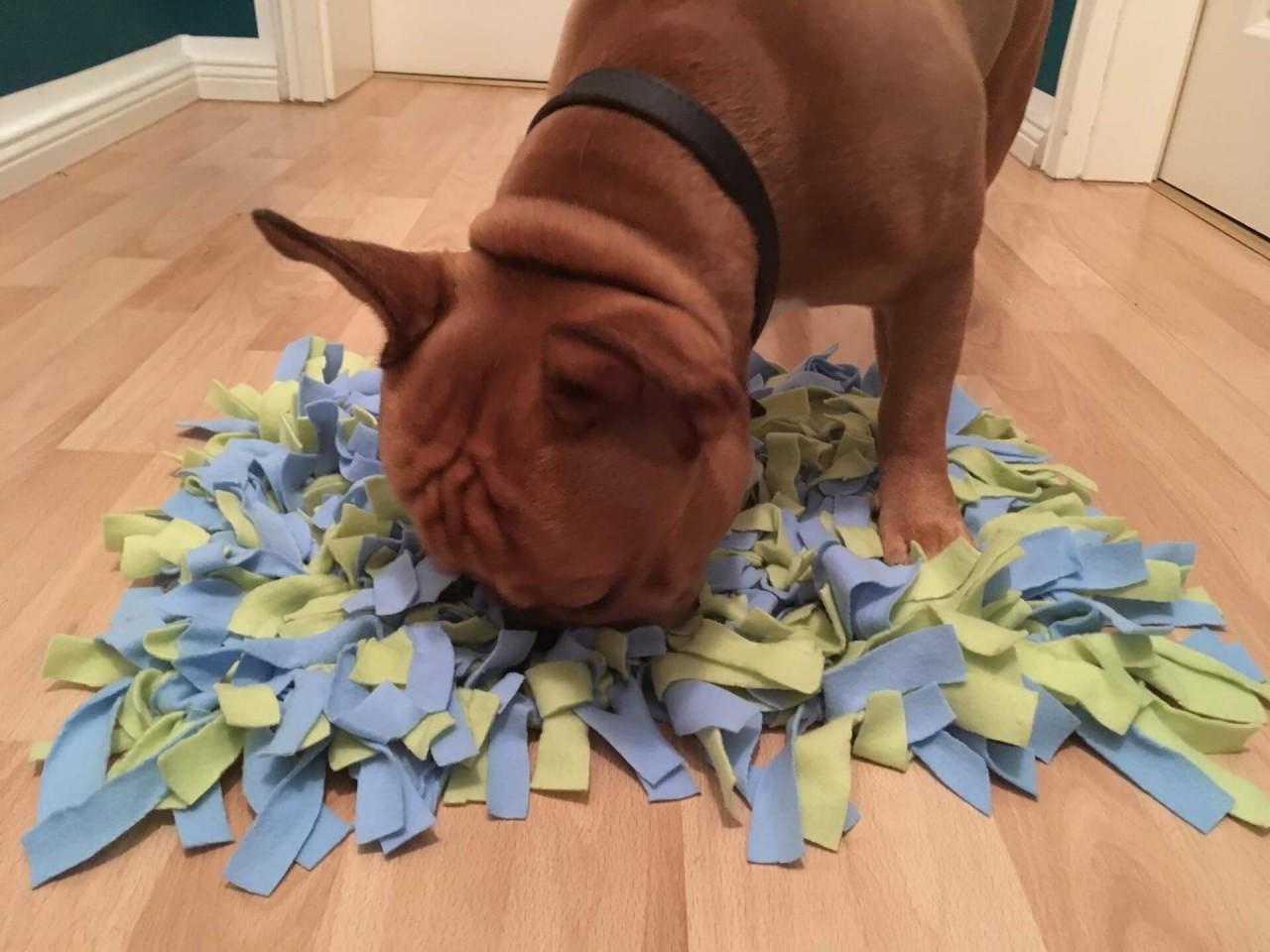 Hund-sucht-im-Schnuffelteppich_2