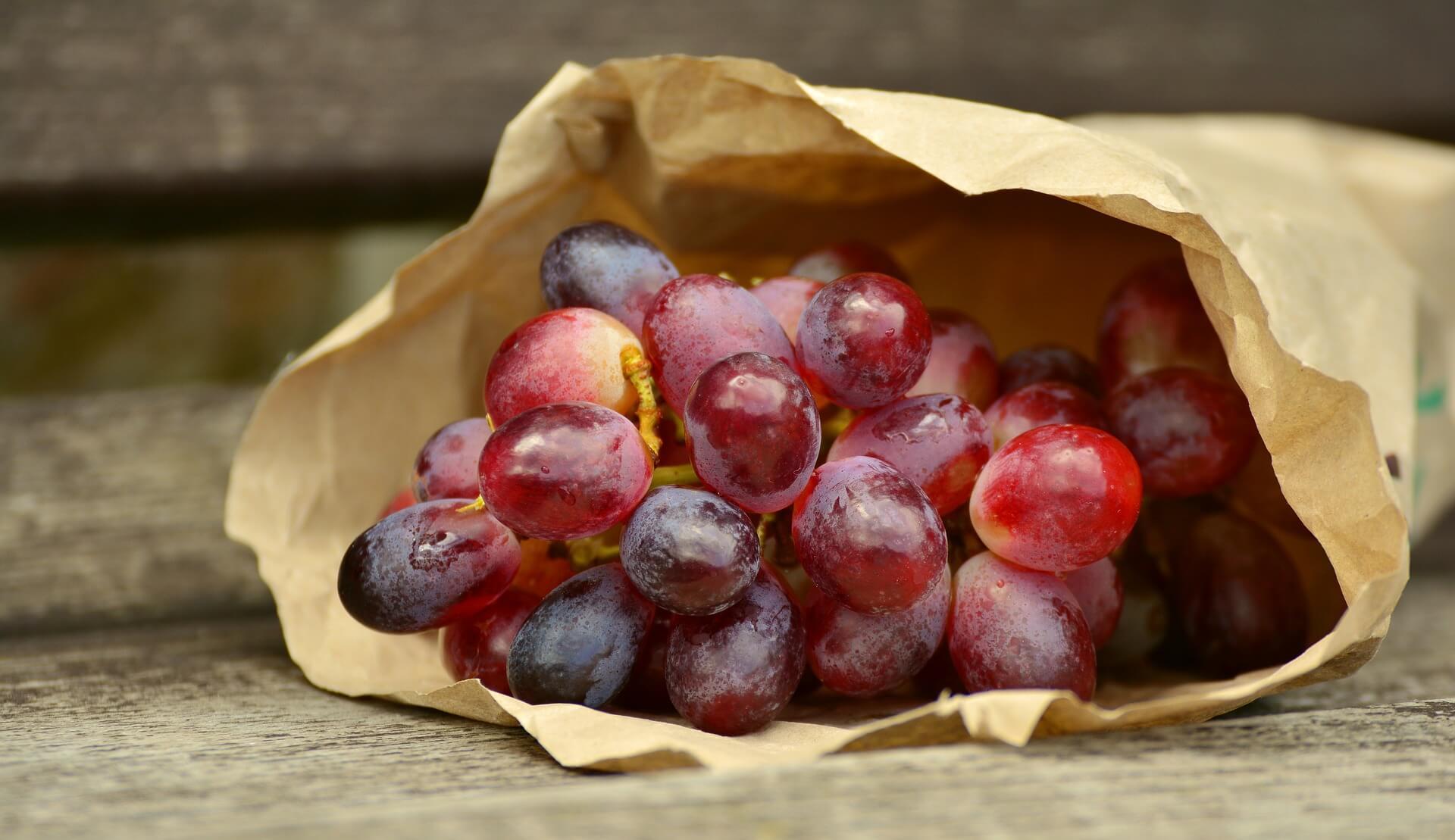 Weintrauben-und-Rosinen-sind-giftig-fur-Hunde