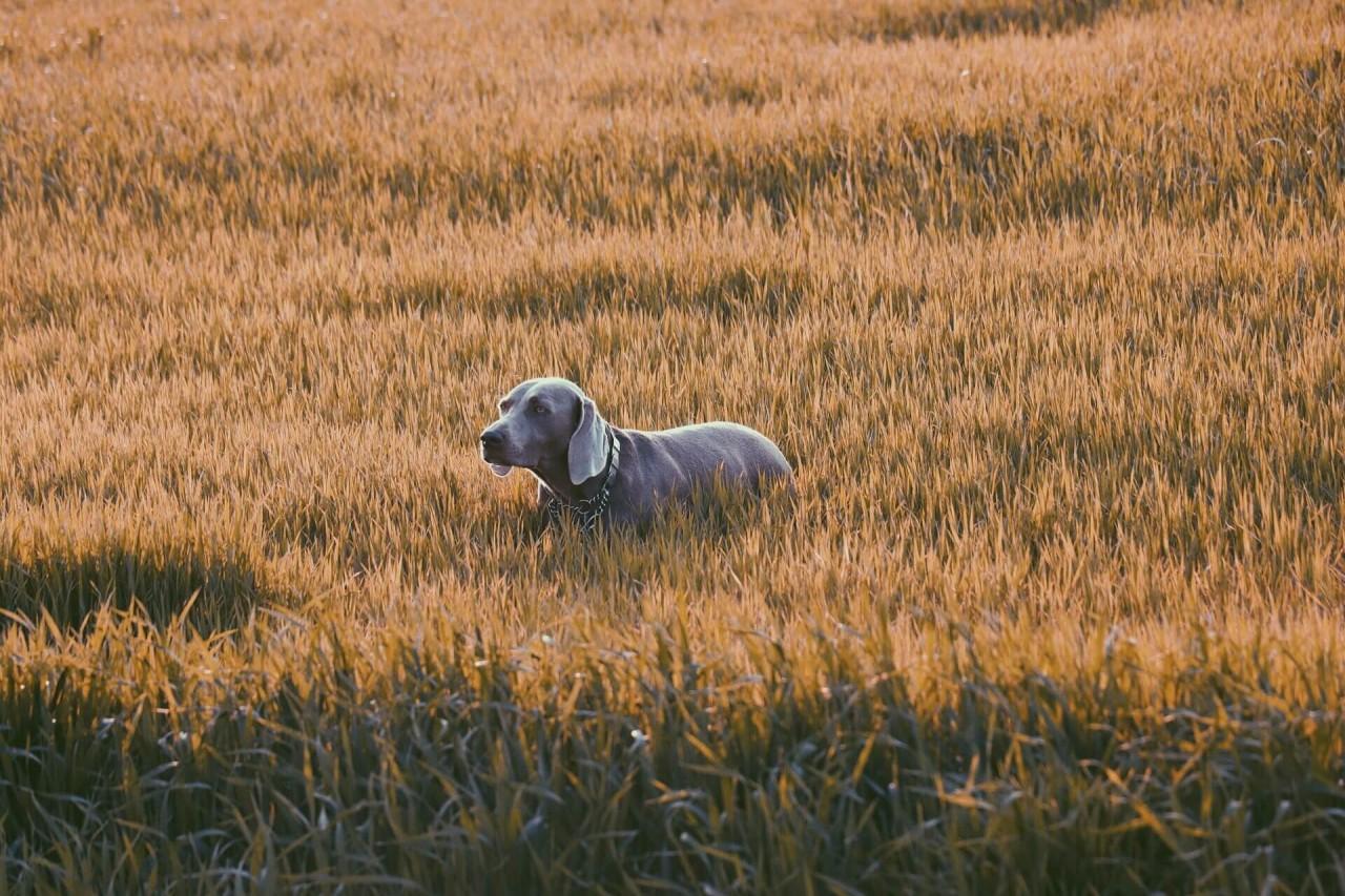 Hund_Wiese_Schutz-Zecken