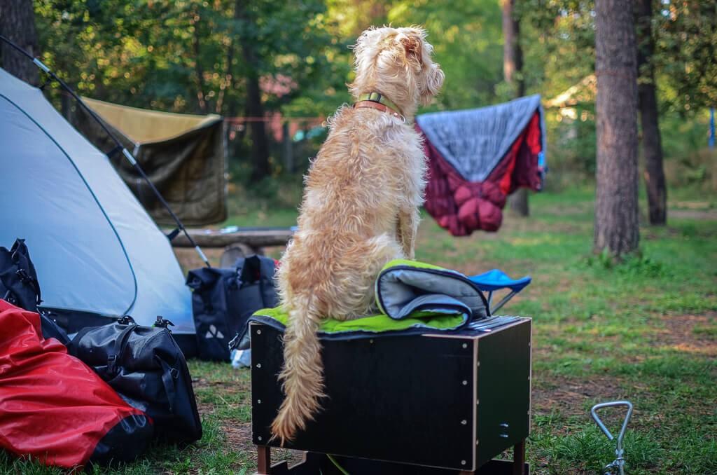 01-Camping-mit-Hund_Tipps-fu-r-das-Zelten-mit-Hund