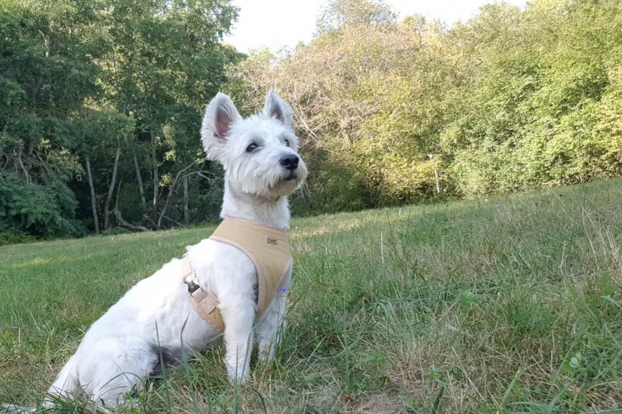 TENETRIO_Loki_Hundegeschichte_Hund-mit-exokriner-Pankreasinsuffizienz_2