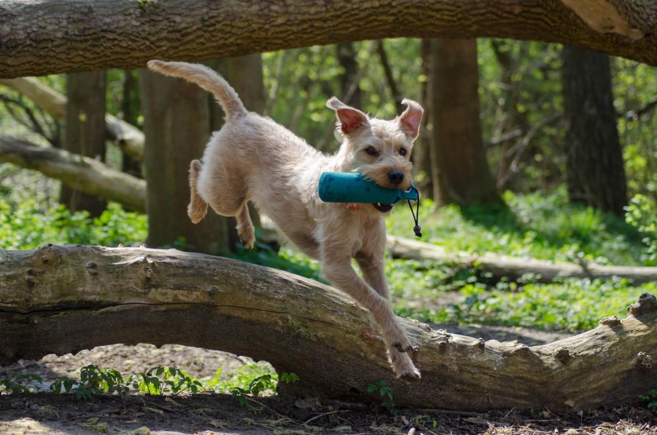 1-Blog-Dummyarbeit-und-Dummytraining-mit-dem-Hund