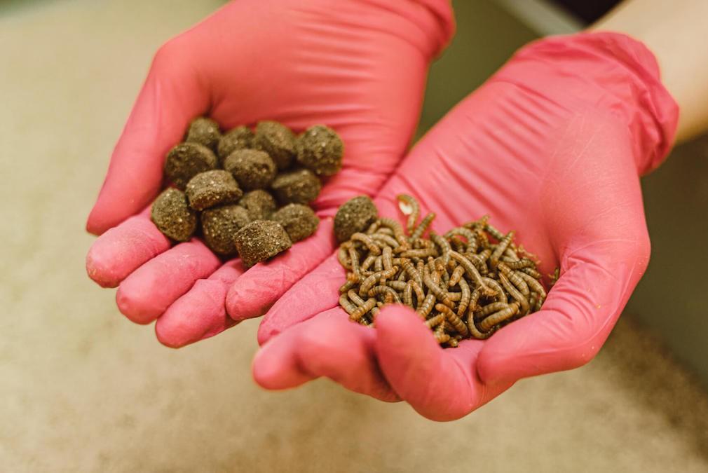 5-gruende-fuer-hundefutter-mit-insekten