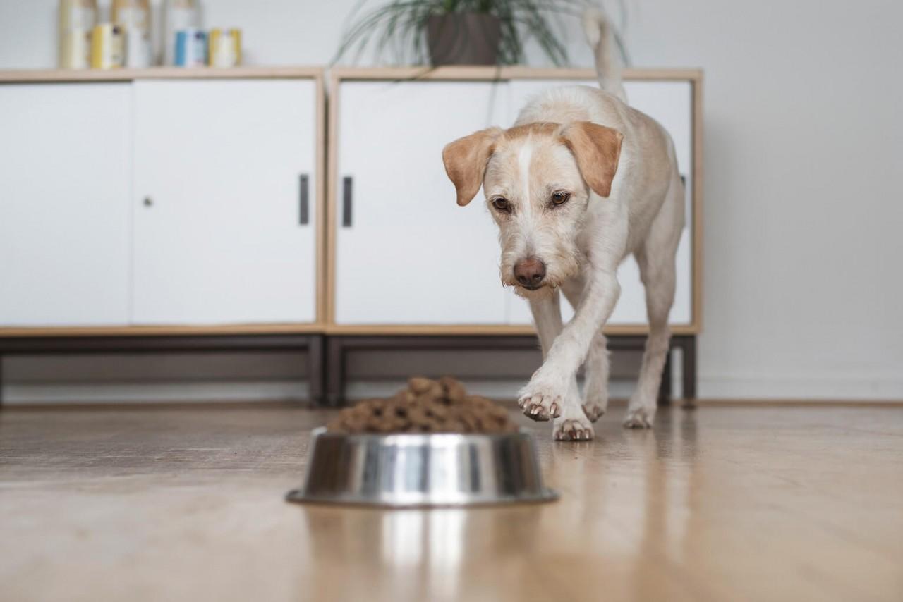 TENETRIO_Ratgeber-fur-Hunde_Hund-nachhaltig-ernahren-mit-Insektenprotein