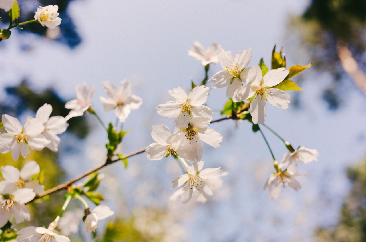 Fünf Tipps für das Frühlingserwachen mit deinem Vierbeiner