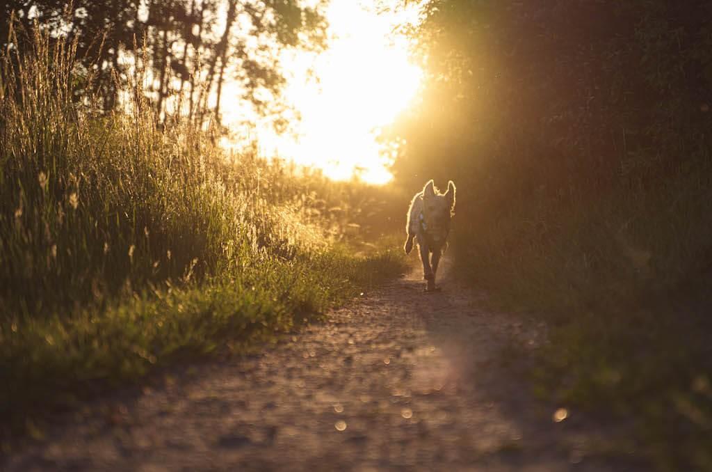 1-Tipps-Sommer-mit-Hund