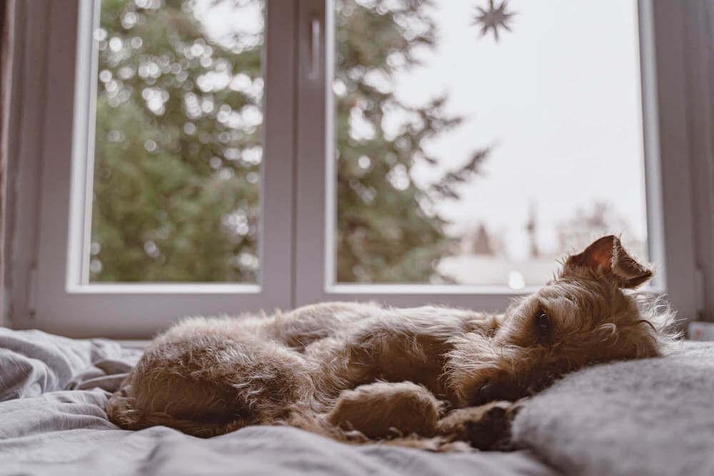 TENETRIO_Hund-Durchfall-Tipps-TierarztinXNnLR1piiemWt