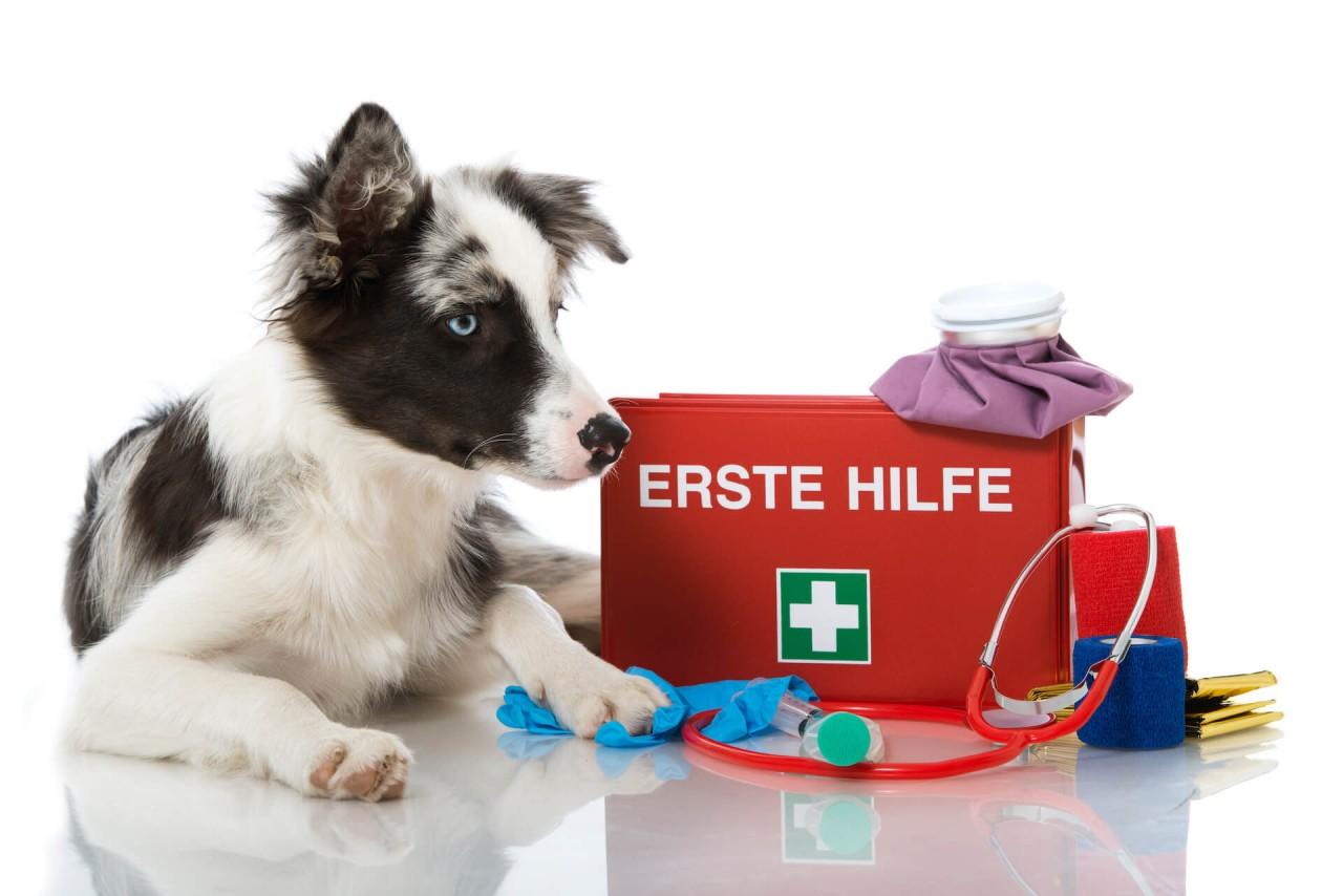 Unsere Checkliste für deine Hundeapotheke