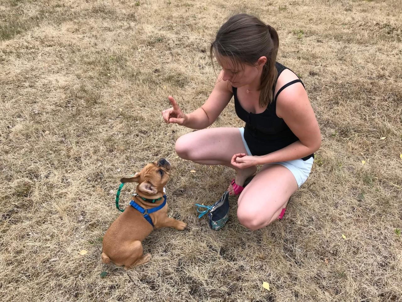 TeneFritz: Ein Welpe geht zur Schule