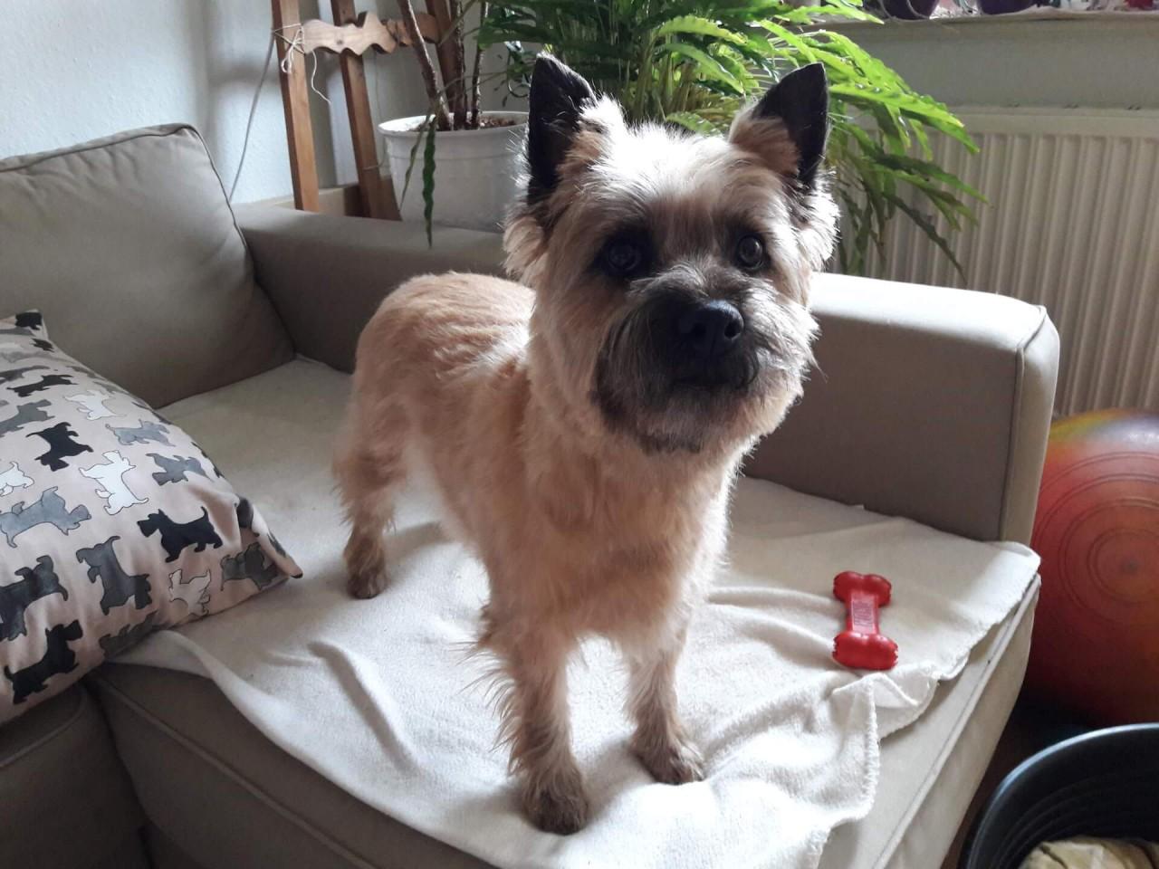 Hundegeschichten: Der quirlige Spencer
