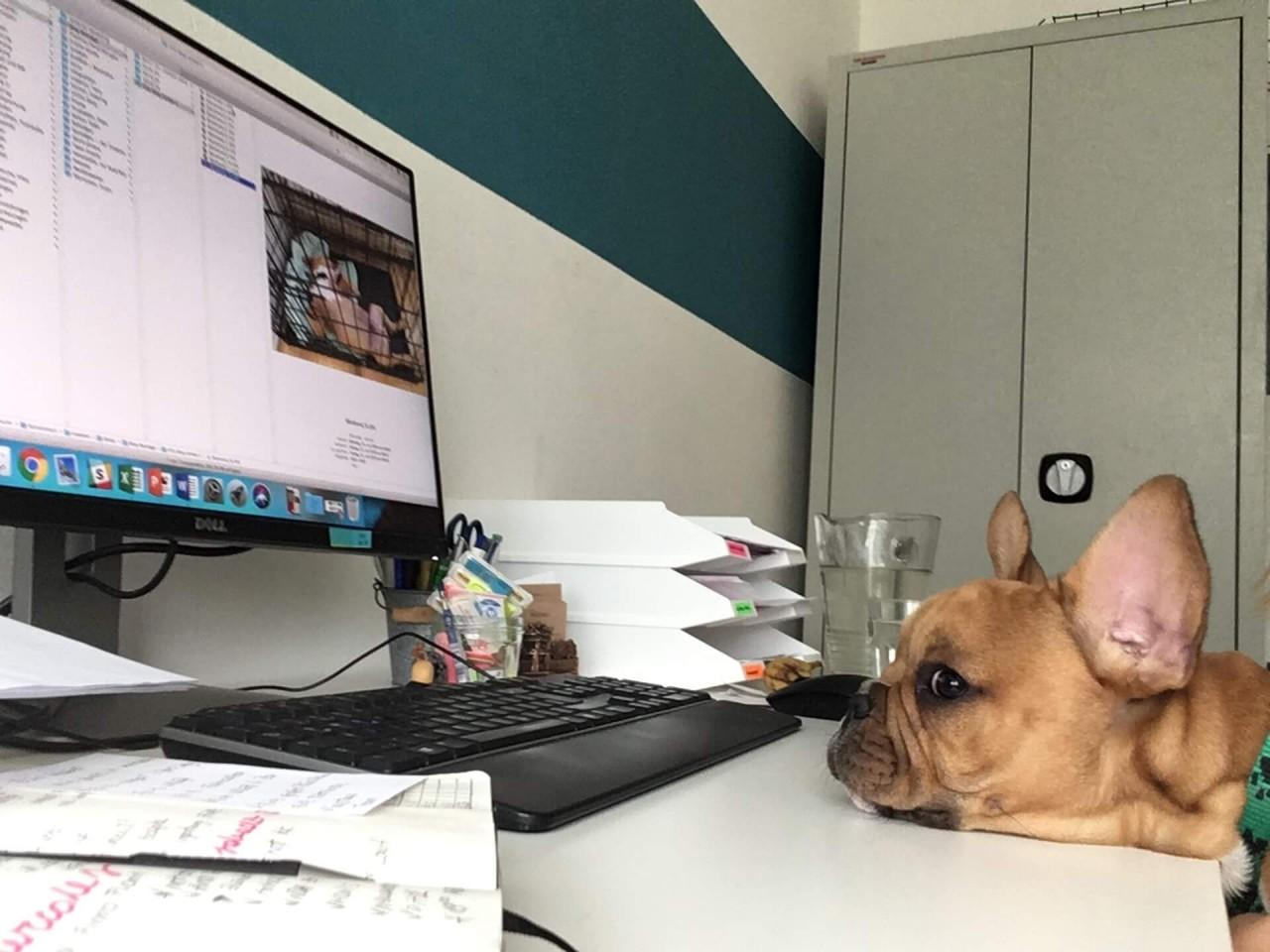 TeneFritz: Mein Leben als Bürohund