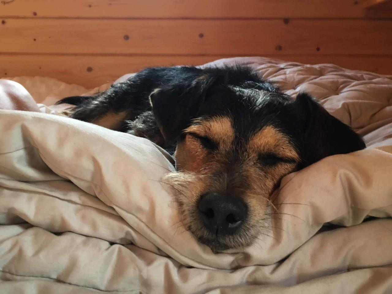 Studie-Frauen-schlafen-ruhiger-mit-Hund_Paula