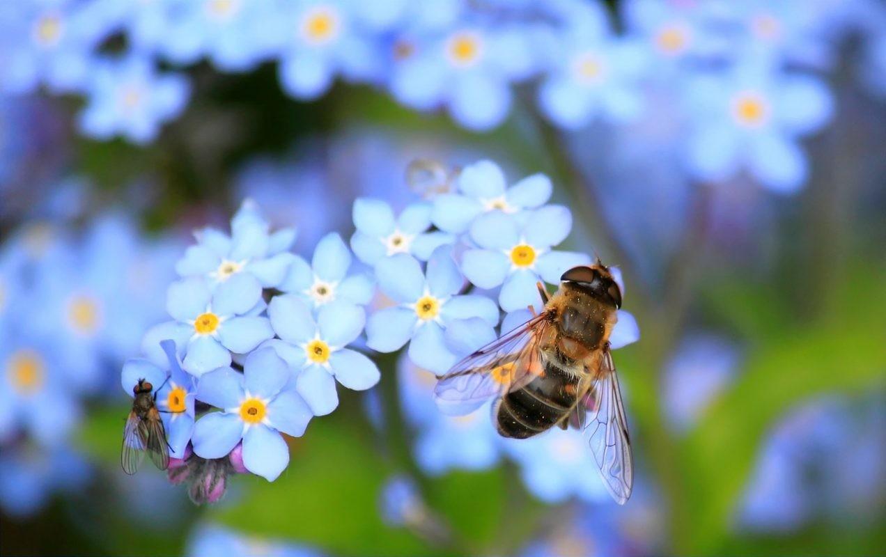 Insekten essen VS. Insektensterben verhindern