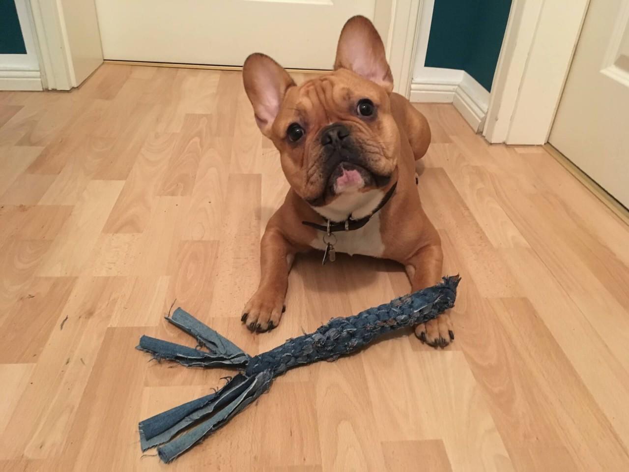 DIY: Kauspielzeug für deinen Hund