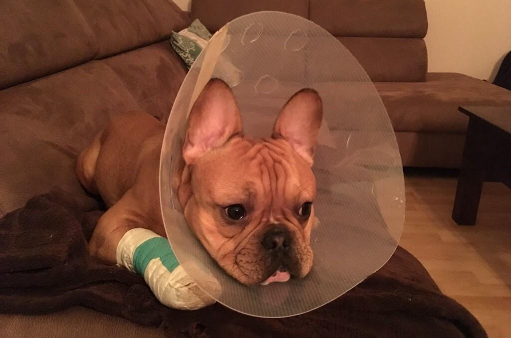 01-Hund-mit-Halskrause-Tipps-und-Alternativen