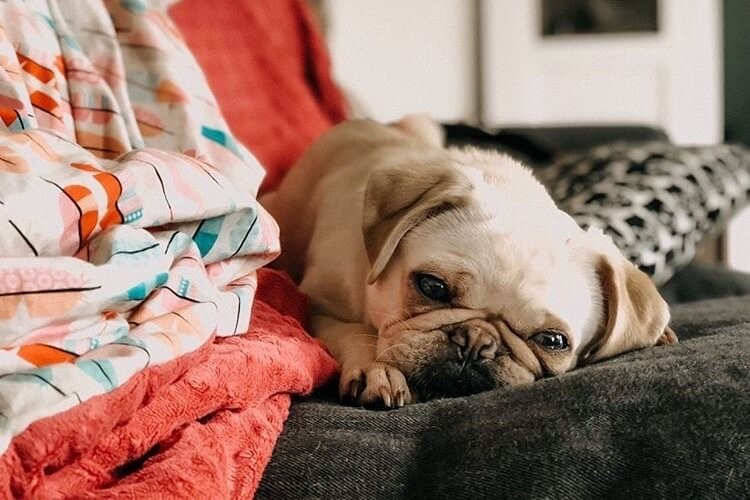 TENETRIO_Erbrechen-beim-Hund_Ursachen-Anzeichen-Behandlung-Vorbeugung