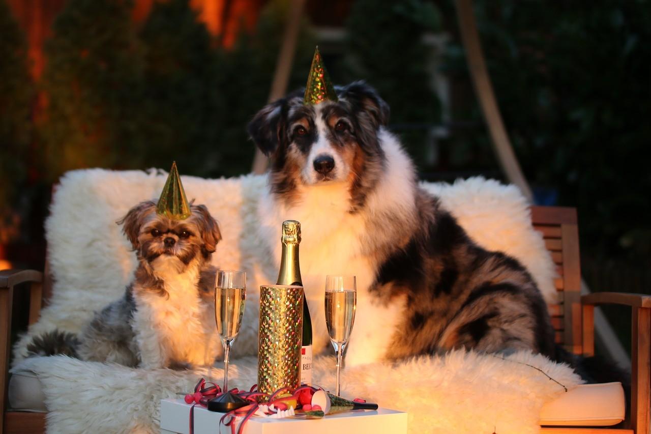 Tenetrio_Silvester-mit-Hund_3
