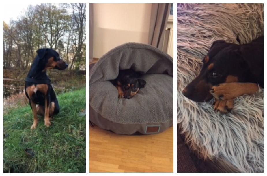 Hundegeschichte: Mila und das Problem mit Futtermilben