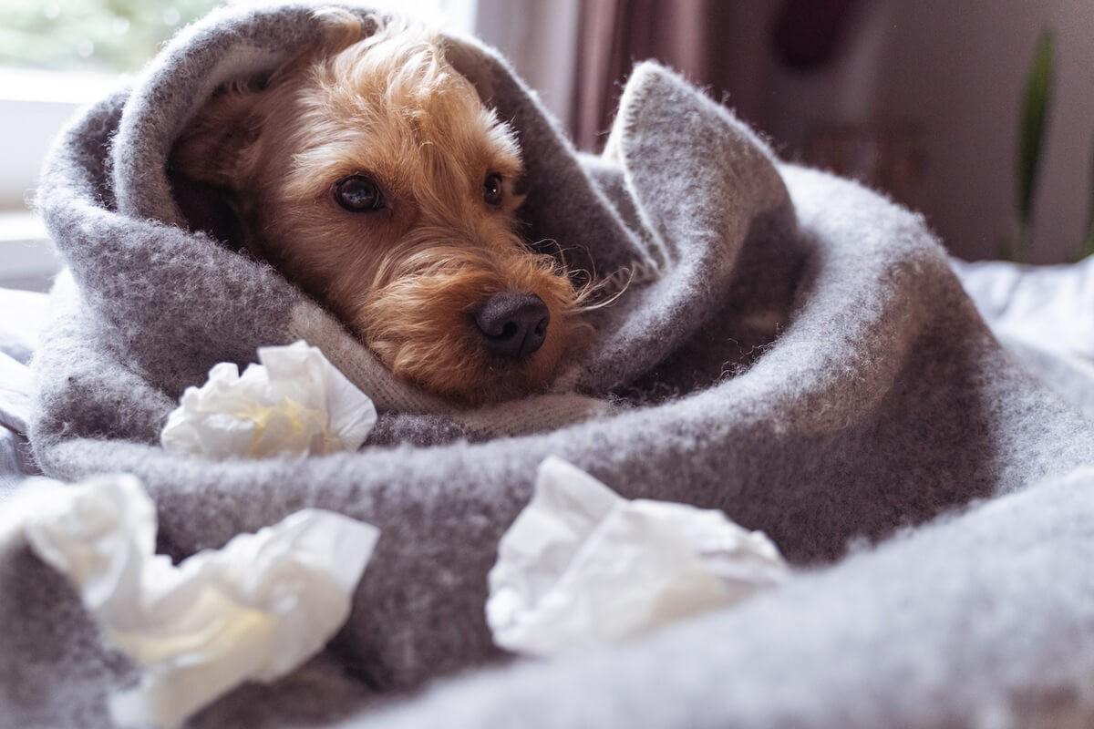 TENETRIO_Corona-Krise-und-Hund_Teil-1-Hintergrund-Informationen