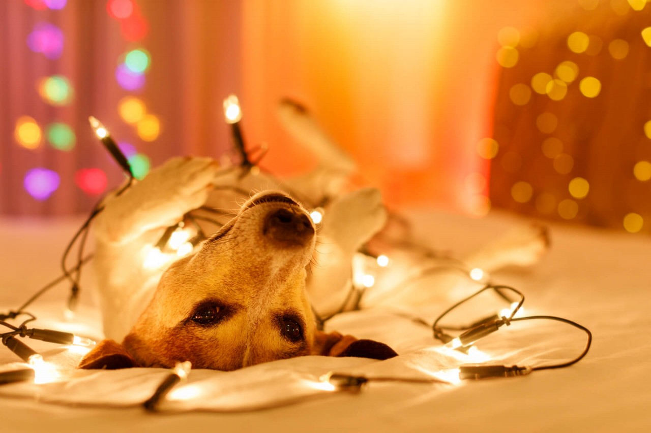 Adventskalender-fur-Hunde_Javier-brosch_2