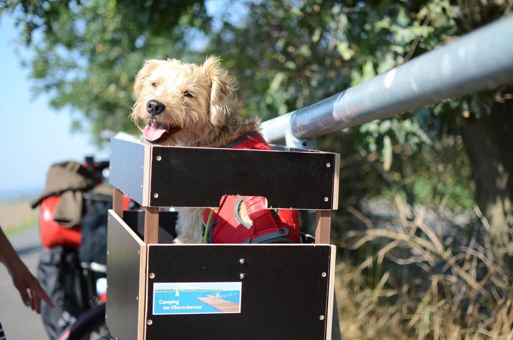 1-Radfernreise-mit-Hund-Radanha-nger
