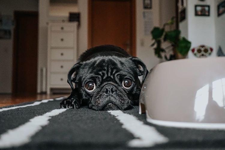 Meinen wie zu ich dazu mich bringe besteigen hund Reaktiver Hund