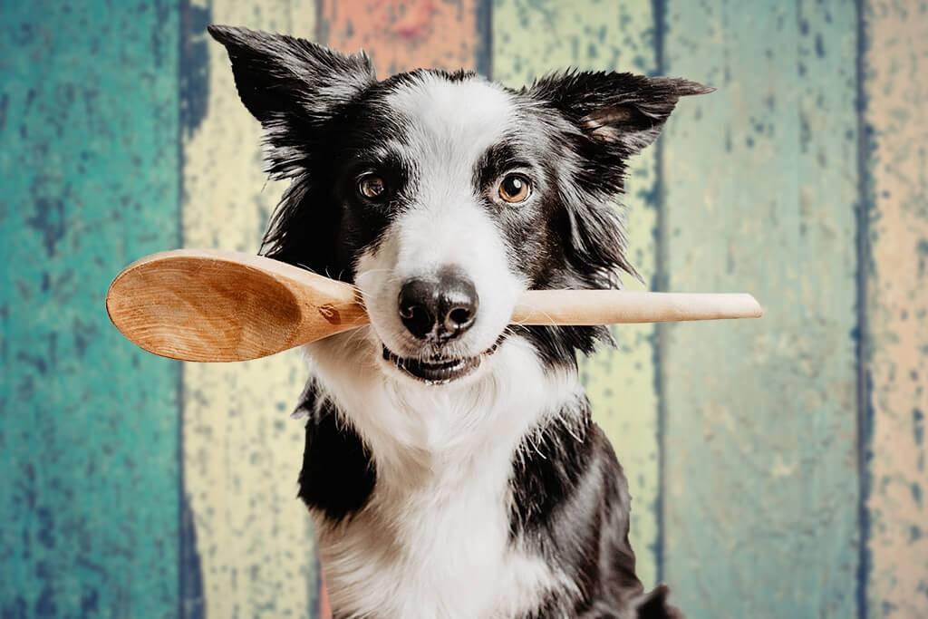 TENETRIO_hypoallergenes-Hundefutter-selber-kochenh5z5WN0BWnMcd
