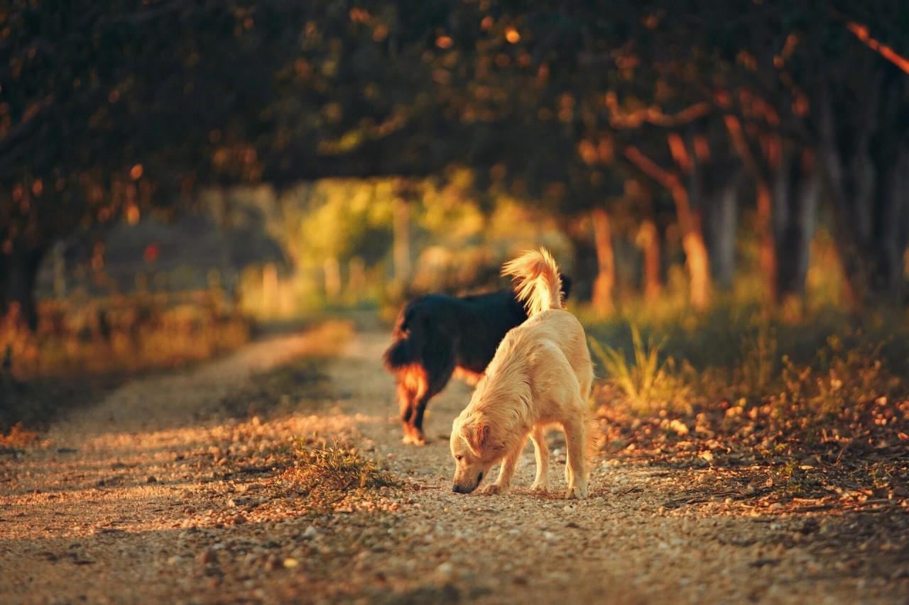 Blog_Wu-rmer-beim-Hund_Hunde-schnu-ffeln-am-Boden